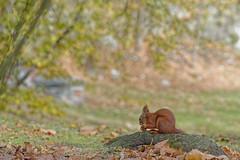 Squirrel #4 - Let's feast begin