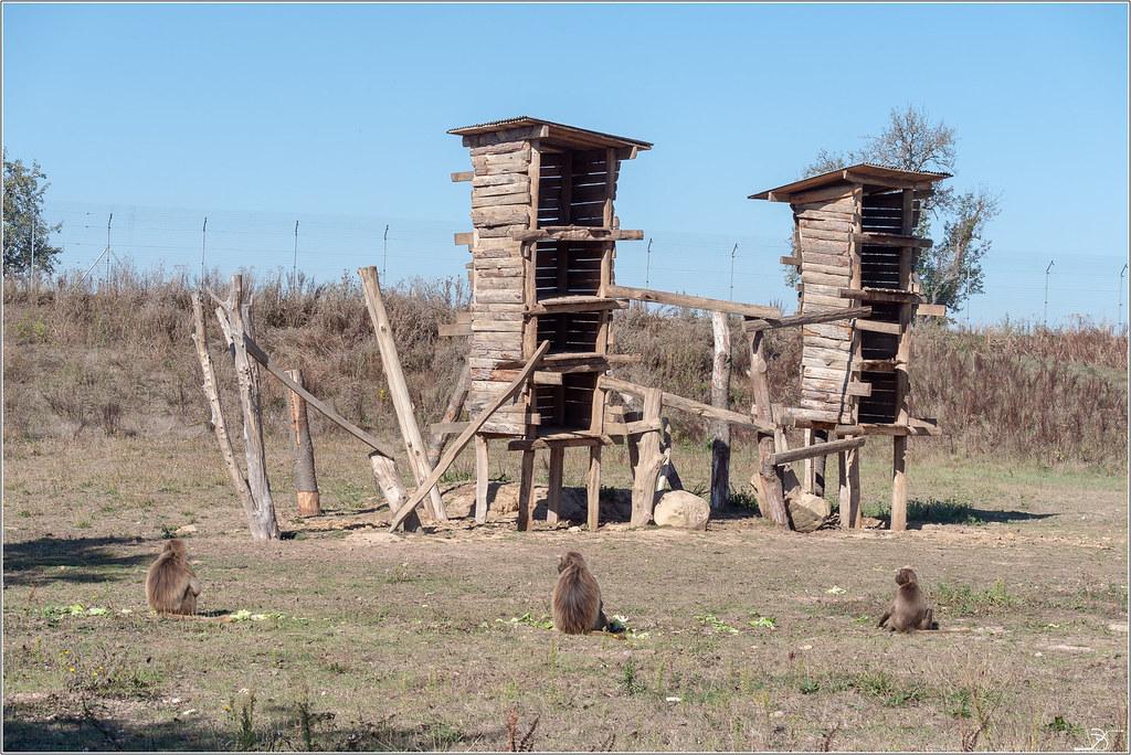 Terre des singes part4 45003926711_b7b974e60f_b