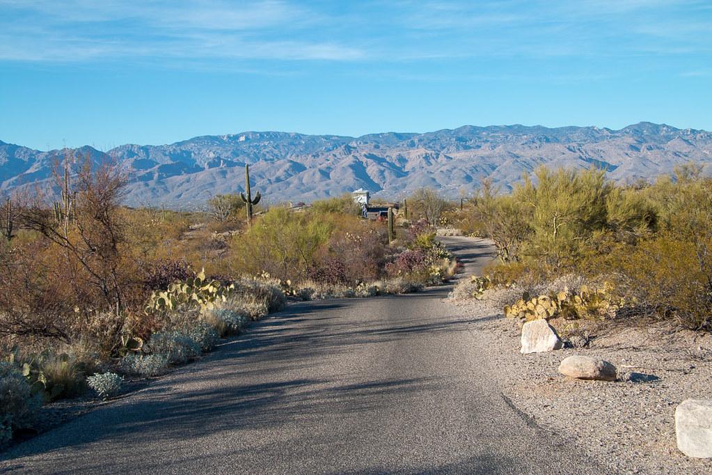 Cactus Forest Drive | Saguaro National Park