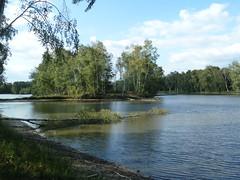 Sainte Montaine Eté2016, les étangs (7)