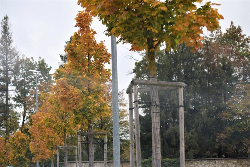 Autumn Trees 10.10 (2)