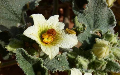 Pequeña flor concurrida