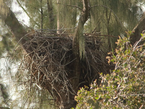 Bald Eagle nest 20181007