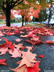 Splendid Fall Color