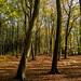 251018_Buckland Wood L_1539.jpg