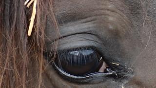 Kein Fruehstueck, kein Pferd und kein Geld in Graditz 00323