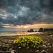 Flores en la playa. by Roberto_48