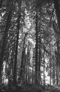 Corridor of Trees
