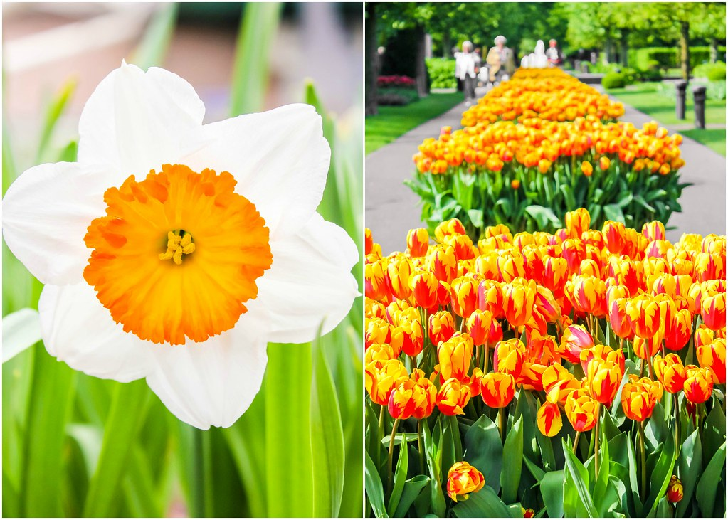 keukenhof-flower-garden-alexisjetsets