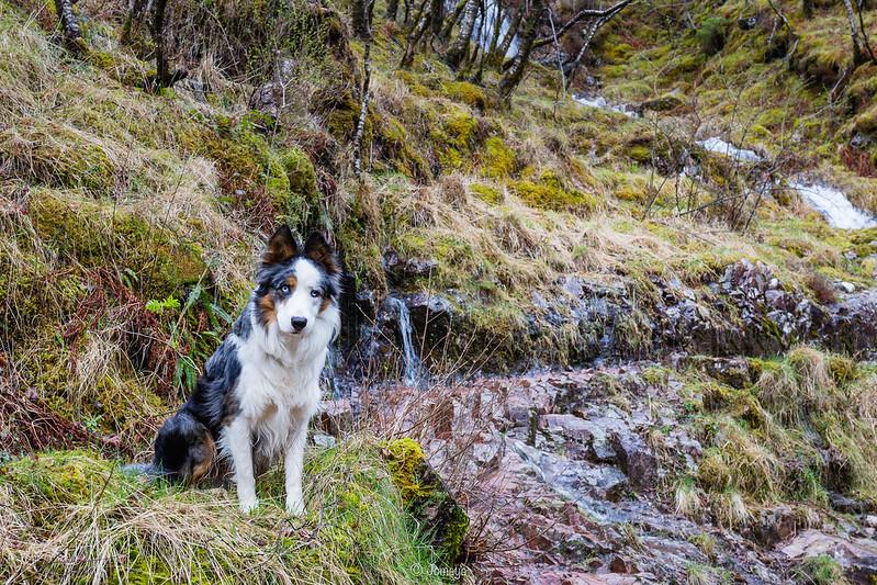 Il n'a pas l'air trop malheureux là ? :D Ice a adoré l'Ecosse, les rochers, les ruisseaux partout ...