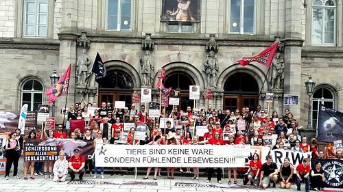 Göttingen für die Schließung aller Schlachthäuser
