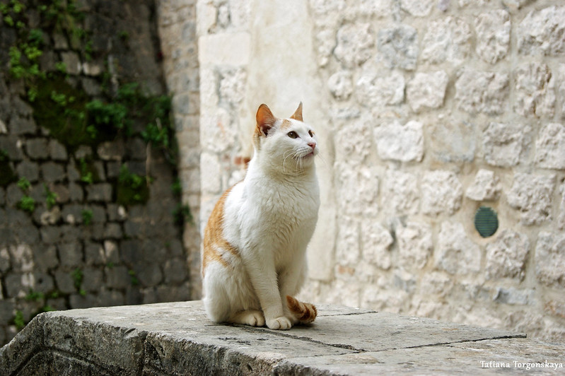 Кот из Старого города