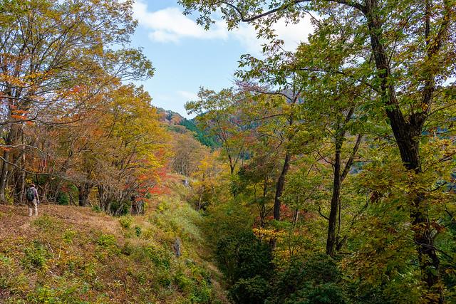 川苔山への道