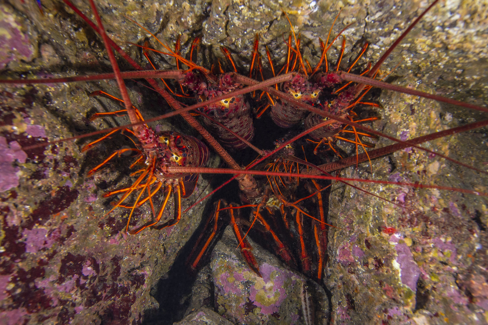 lobsterSept7-18, Canon EOS REBEL T4I, Canon EF-S 10-22mm f/3.5-4.5 USM