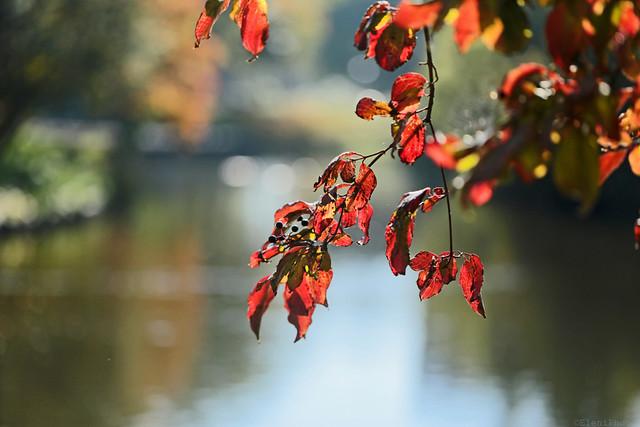 Autumn red....