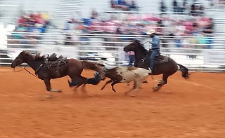Steer wrestling | by walter furtak (w4pb)