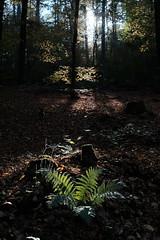Walk the Wood
