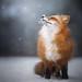 Wintertime Happiness by Alicja Zmysłowska