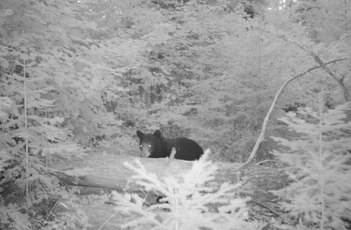 Summer 2018 Wildlife cam