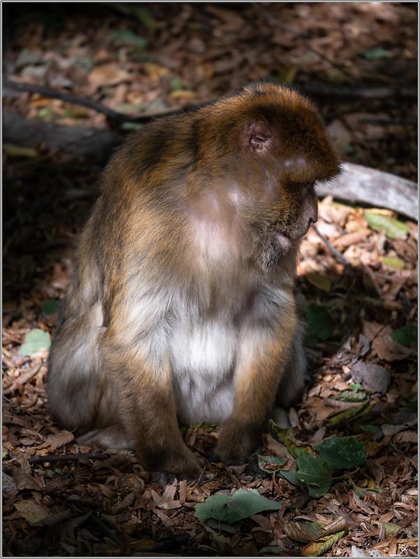 Terre des singes part3 30068230307_a60663d430_c