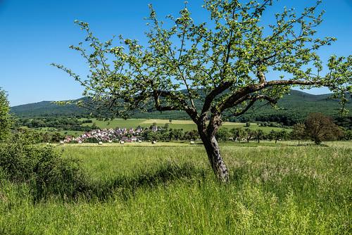 Village under the tree