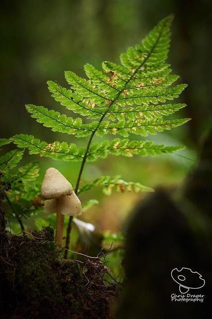 Forest, fern & fungi, Sony ILCA-77M2, Tamron SP AF 60mm F2 Di II LD [IF] Macro 1:1