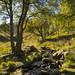 Chew brook, Greenfield
