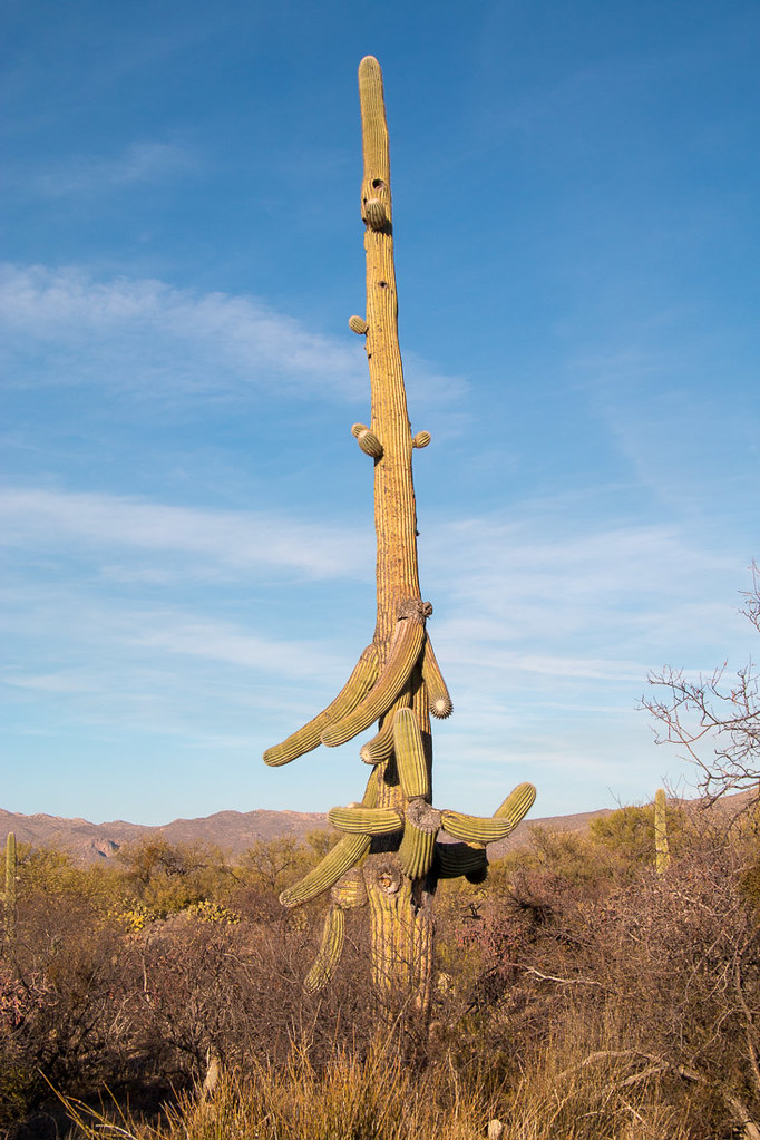 Views along Cactus Forest Drive