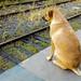 Esperando el paso del tren.