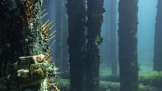 Busselton Jetty - underwater observatory 02