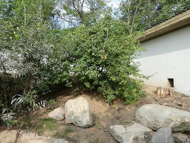 Nasenbäranlage, Zoo Givskud