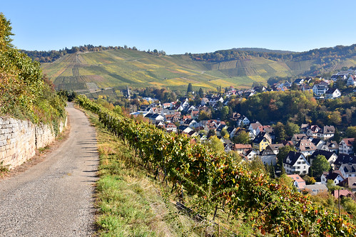 Wine Trail Stuttgart in Fall
