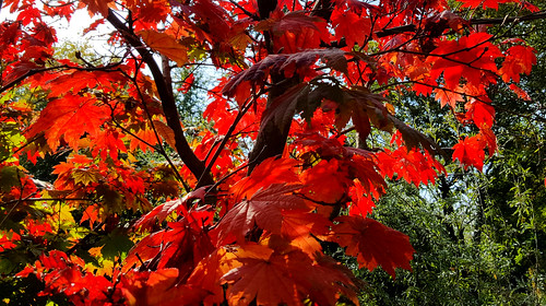 Finnerty Gardens in Red