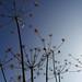 Autumnseeds