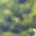 Spiders abound in Autumn by PTMurphus