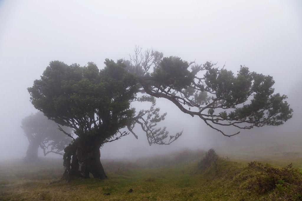 Misty Branch
