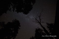 Night sky over the cottage in the woods