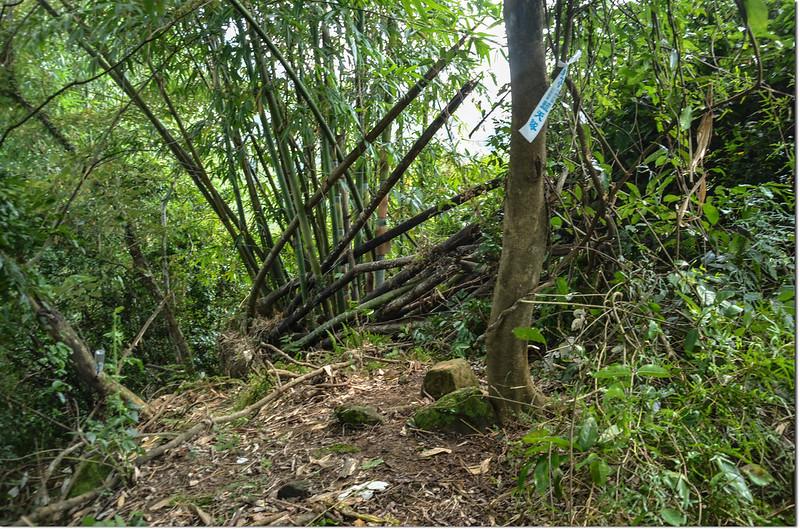 二寮坑山冠字補山(29)山字自然石森林三角點點位