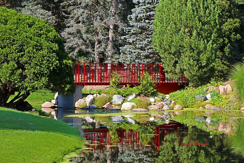 Red Bridge and Blue Spruce