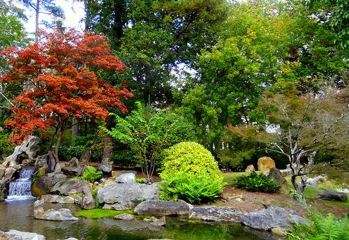 botanical garden landscape flora foliage travel water autumn november usa sony