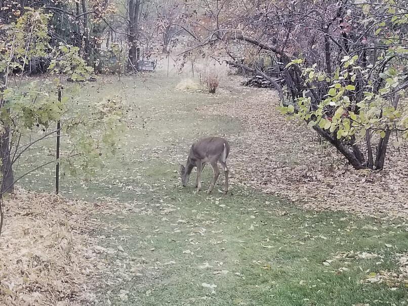 20181008.deer.westyard