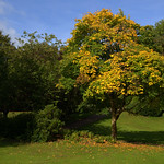 Autumn scene in Miller Park, Preston