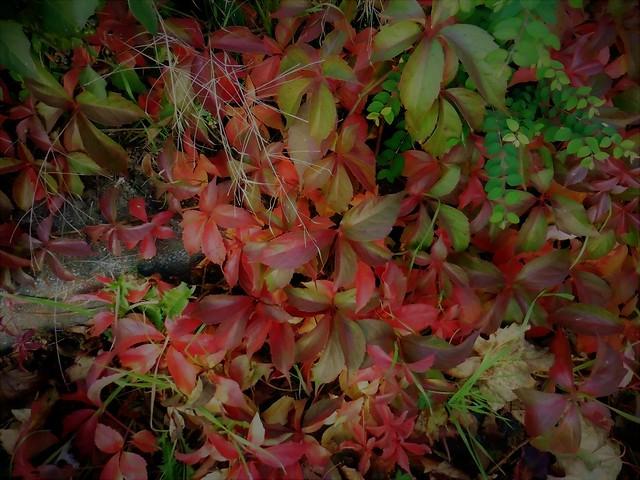 Herbst, Panasonic DMC-TZ56