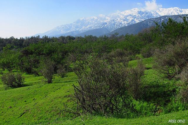 Bosque Nativo Panul