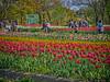 Photo:チューリップの花園で XX By jun560