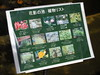 Photo:Plant identification sign By Greg Peterson in Japan