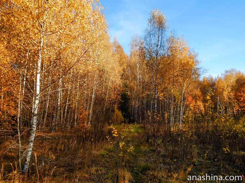 Дорожка в лес