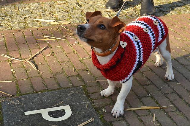 しっかり寒さ対策をして外で遊ぶ犬