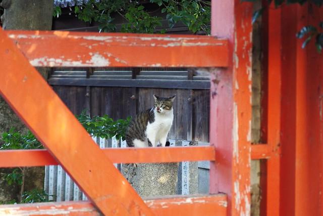 Today's Cat@2018-10-02