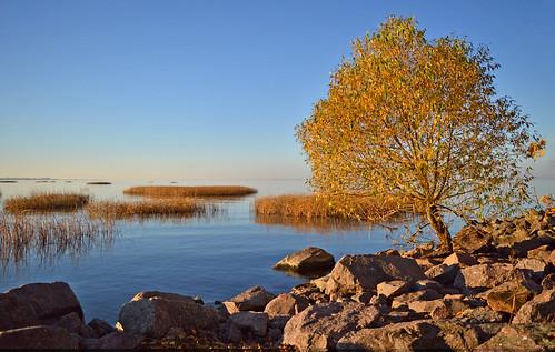 Autumn colors... Blue & Gold. Finland. Sea.